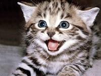khout_kitten_458882_jpeg-magnum.jpg