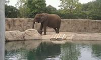 indianapolis_zoo_baby_ele_jpg-magnum.jpg