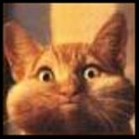 avitar_cat_with_cheeks_jpg-magnum.jpg