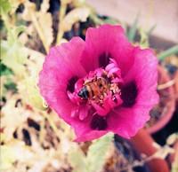 e6fc6a4c_bees_in_the_garden.jpg