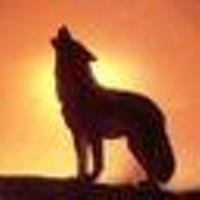 wolf_howling_jpg-magnum.jpg