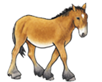 N/A - Meet Gulliver, Equine Voices' mascot and symbol of horse rescue.