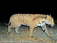 f1dc1d32_jaguar1-2010.jpg