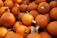 pumpkin_patch.jpg