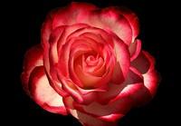 188aa3c6_cherry_parfait_gr_taken_spring_of_2011.jpg