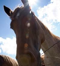01-06-2010_horse_expo.jpg
