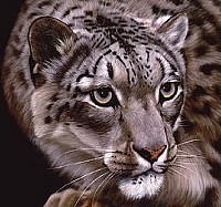 snowleopard_jpg-magnum.jpg