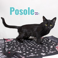 Posole Needs a Home