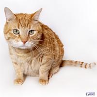 Adoptable Pet: Brody Needs a Home