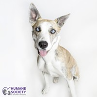 Adoptable Pet: Phoebe Needs A Home