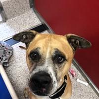 Pima Animal Care Center Needs Foster Parents