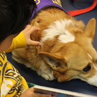 Read to a dog at your local public library