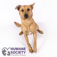 Adoptable Pet: Jake Needs a Home