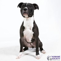 Adoptable Pets: Oscar Needs a Home