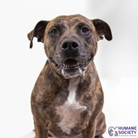 Adoptable Pets: Lulu Needs a Home
