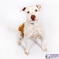 Adoptable Pets: Chloe Needs a Home