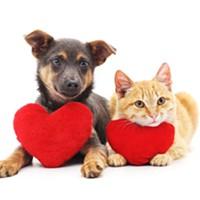 Help homeless pets at PACC this holiday season!