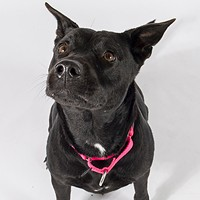 Adoptable Pets: Athena Needs a Home