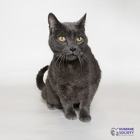 Adoptable Pets: Shadow Needs a Home