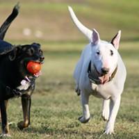 Humane Society Hosting Pet Food Drive This Weekend