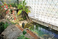 A pool inside Biosphere 2