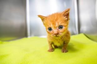 180517_kittens_006_1_.jpg