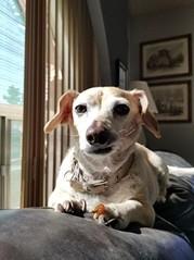 Bonus Pet: Peanut