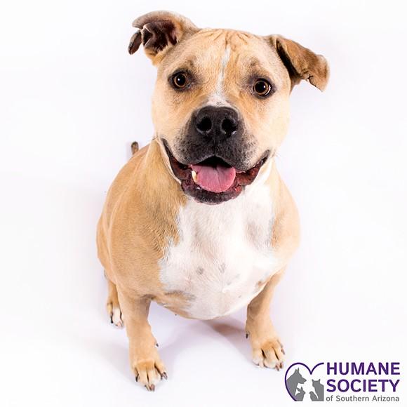 Gabby the dog - HSSA
