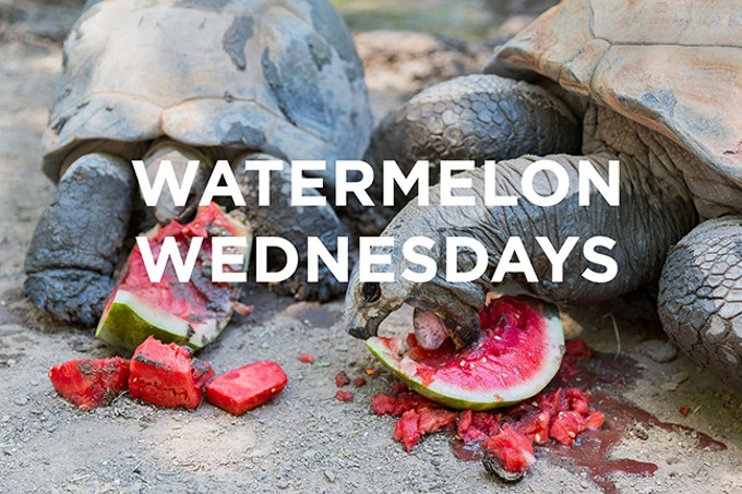 Watermelon Wednesdays - COURTESY