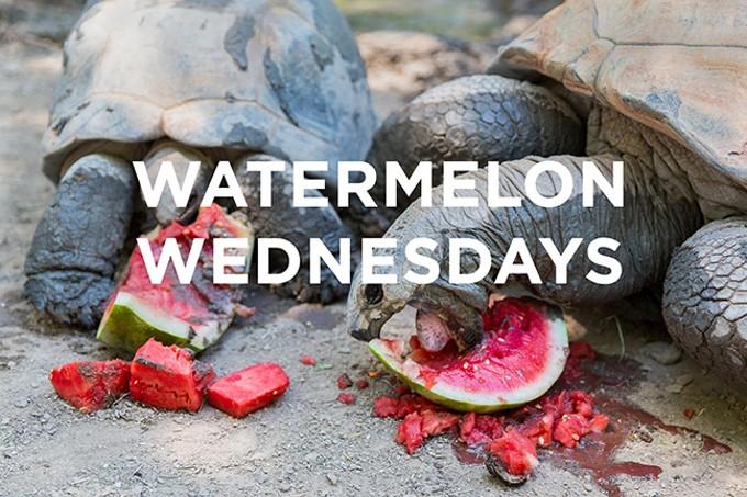 Watermelon Wednesdays - COURTESY