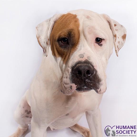 Popeye the Dog - HSSA