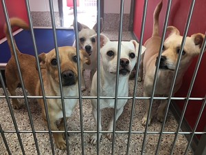 All these cuties need homes! - PACC