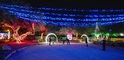 zoo_lights.jpg