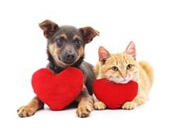 dog-cat-hearts.jpg