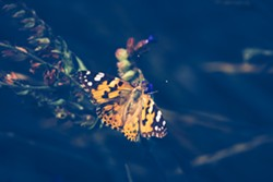 bigstock-nature-background-butterfly-b-309080482.jpg