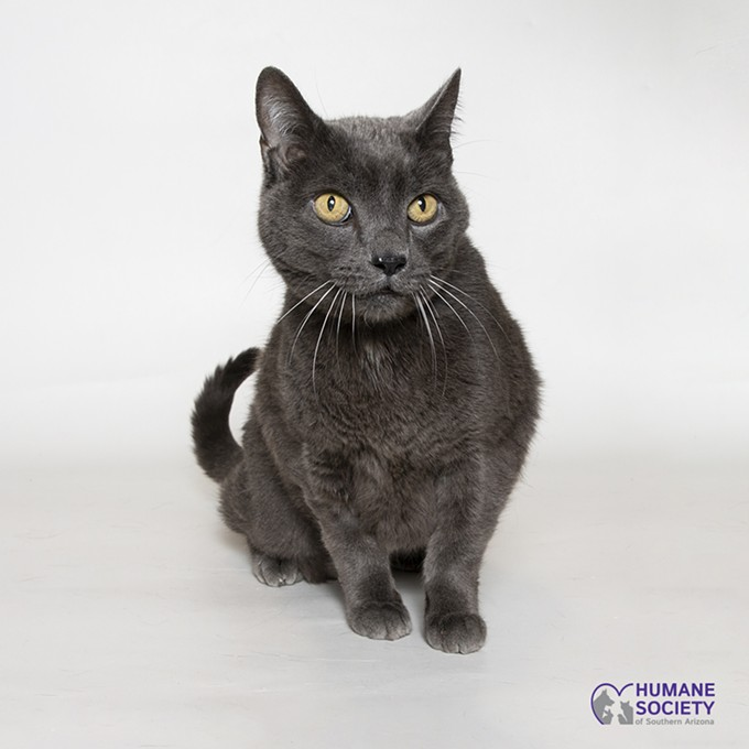 Shadow - COURTESY HUMANE SOCIETY OF SOUTHERN ARIZONA