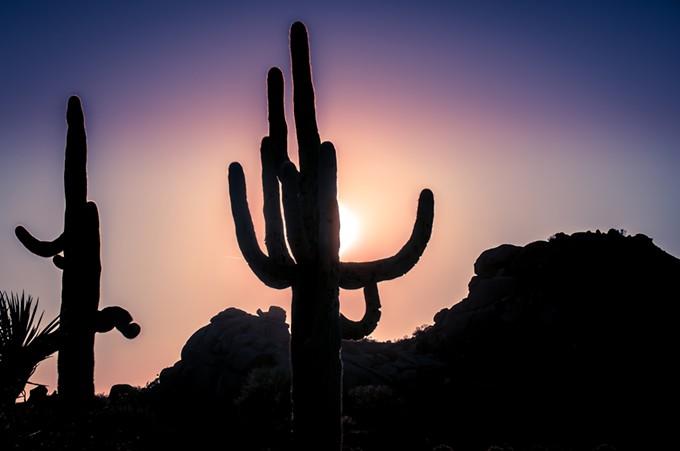 bigstock-desert-sunset--saguaro-cactus-119030720.jpg