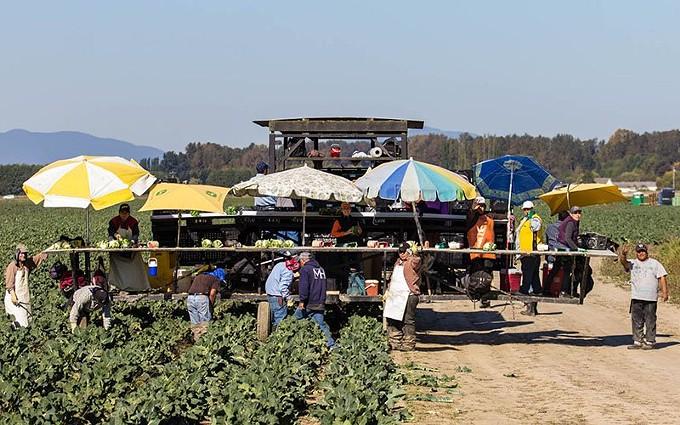 farmworkfield-800.jpg