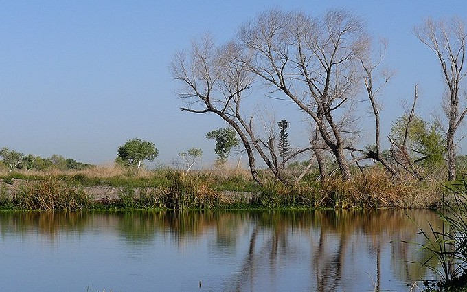 A 2013 photo of a pool in the Tres Rios wetlands, a reclaimed part of the Salt, Gila and Agua Fria rivers that is now teeming with wildlife. Tres Rios is one of the projects named in a bill creating a $150 million fund for local water projects in Arizona, with the first $900,000 being released for a Pascua Yaqui irrigation project. - DOCENTJOYCE