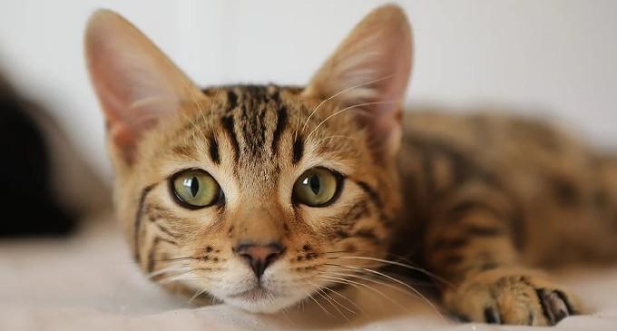 cat_fest.jpg
