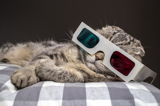 Any excuse to post a cute cat picture. - BIGSTOCK