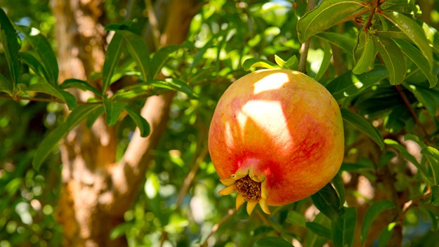 Grab some pomegranate, lemon and orange trees and think about how much juice you'll be able to make. - BIGSTOCK