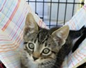 Fine Wines for Felines benefit for PAWSitively CATS No-Kill Shelter