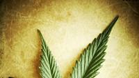 Medical Marijuana: Crummy Case