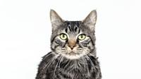 Adoptable Pet: Paulie Needs a Home