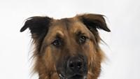 Adoptable Pets: Max Needs a Home
