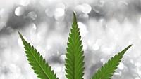 520 Cannabis
