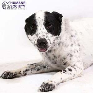 Adoptable Pets: Wampa Needs a Home