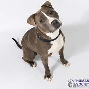 Adoptable Pets: Collins Needs a Home