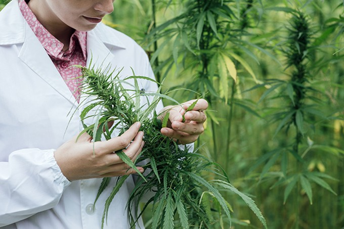 bigstock-scientist-checking-hemp-flower-106515629_1_.jpg